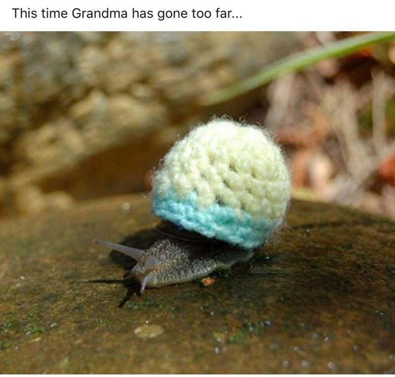 Organism - This time Grandma has gone too far...