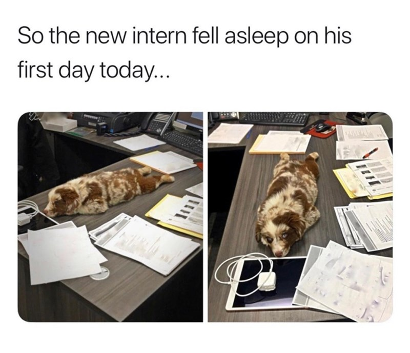 Food - So the new intern fell asleep on his first day today... пH,