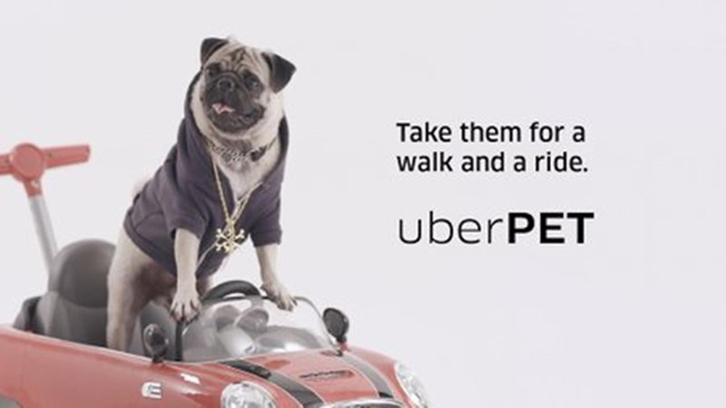 Pug - Take them for a walk and a ride. uberPET Tn