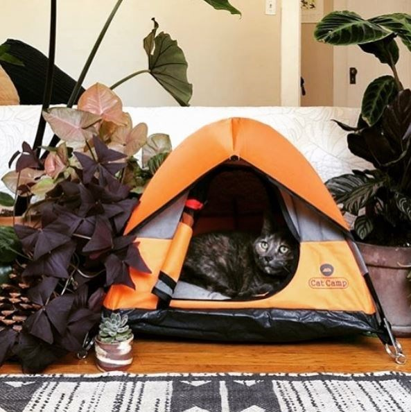 Tent - Cat Camp