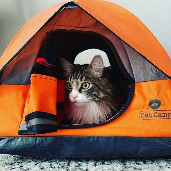 Cat - Cat Camp