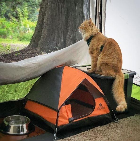 Tent - Cat Canp