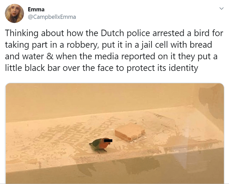 Text - Emma @CampbellxEmma Thinking about how the Dutch police arrested a bird for taking part in a robbery, put it in a jail cell with bread and water & when the media reported on it they put a little black bar over the face to protect its identity USREN