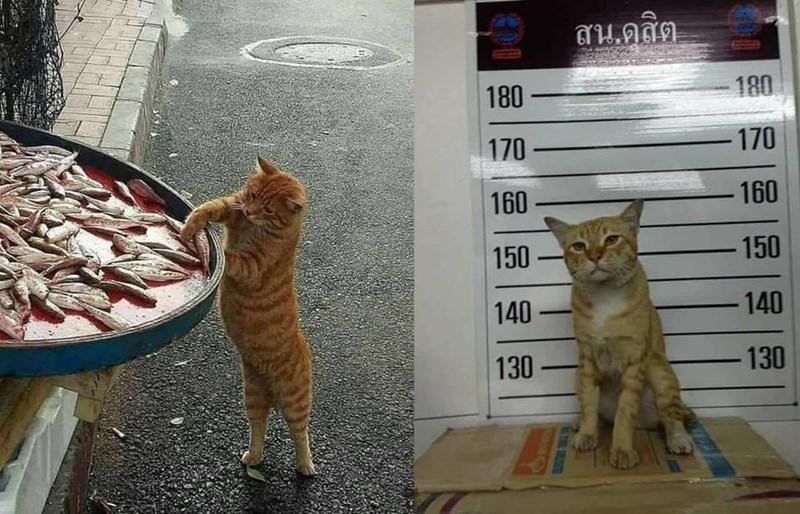 cat memes - 9371911424