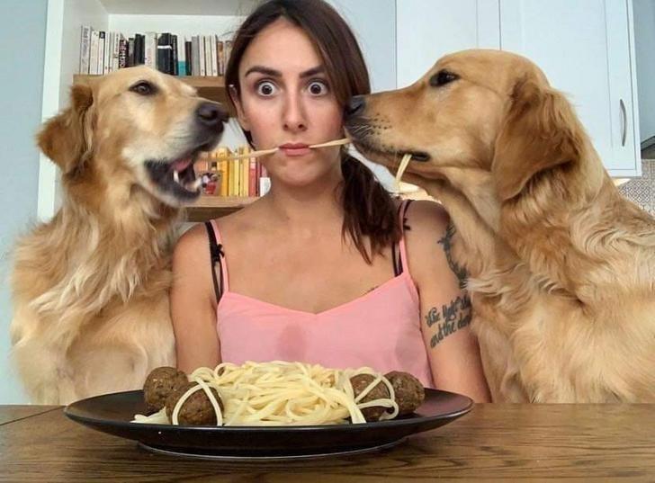 Dog - adthi d Bes