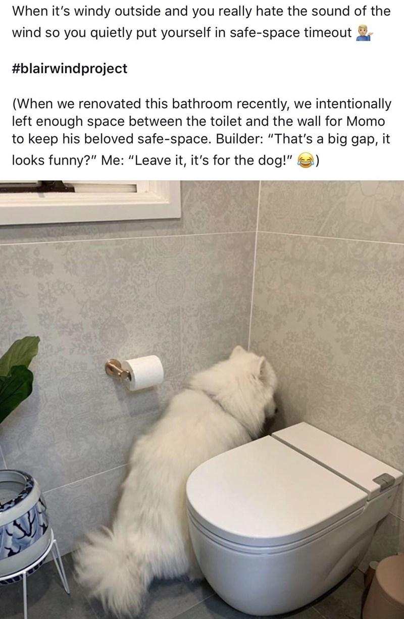 dog memes - 9371926528