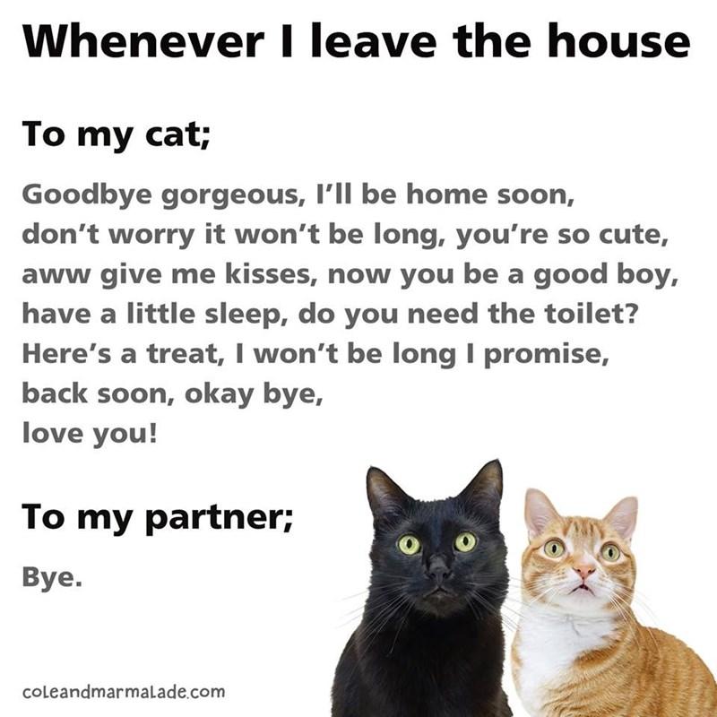 cat memes - 9372097024