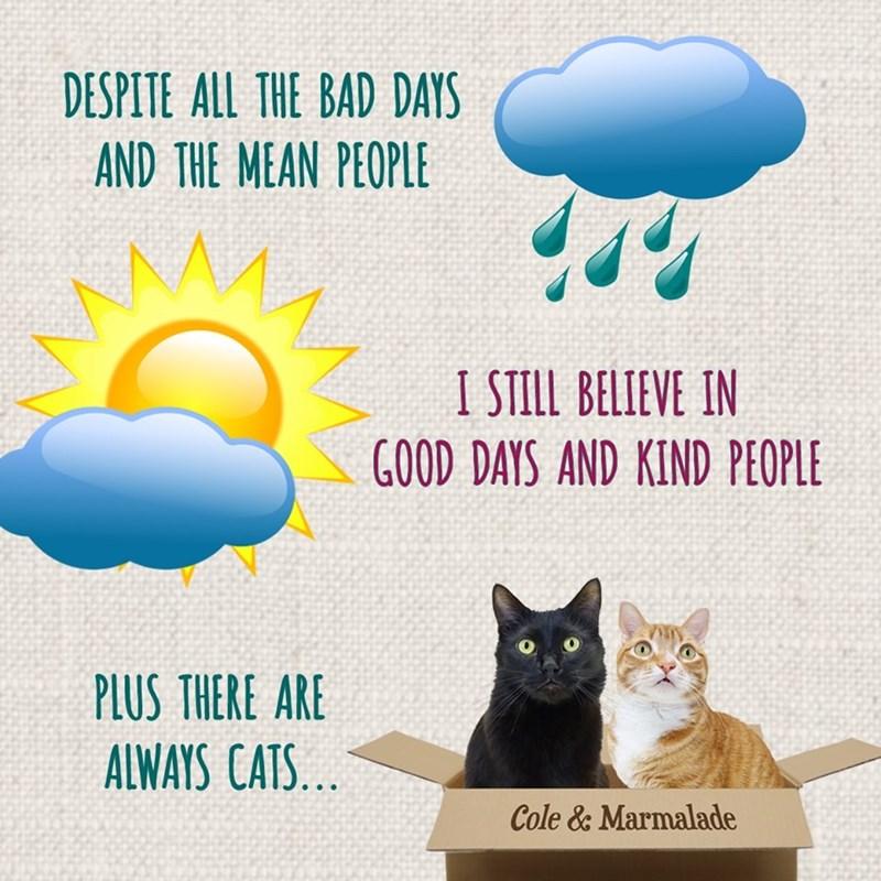 cat memes - 9372097280