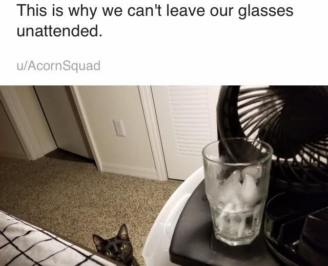 Cat - This is why we can't leave our glasses unattended u/AcornSquad