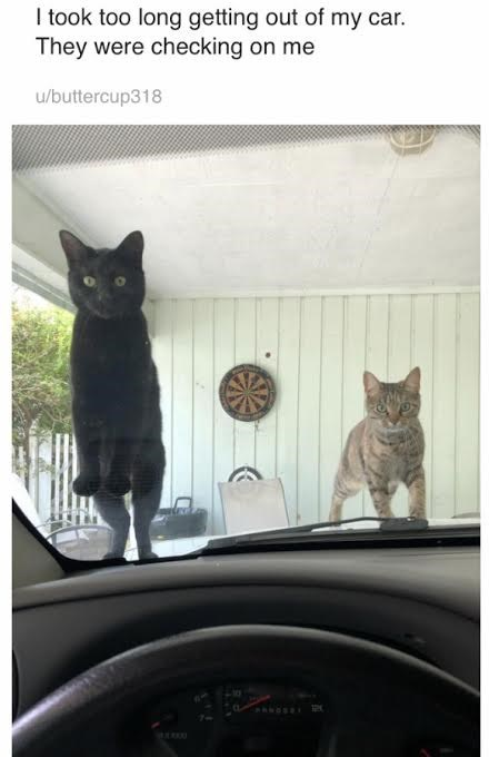 Cat - Itook too long getting out of my car. They were checking on me u/buttercup318