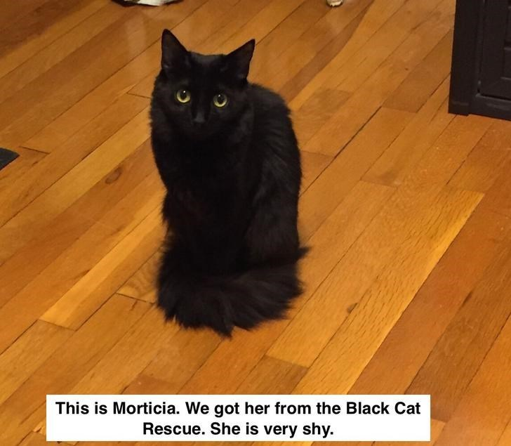 Cat - This is Morticia. We got her from the Black Cat Rescue. She is very shy