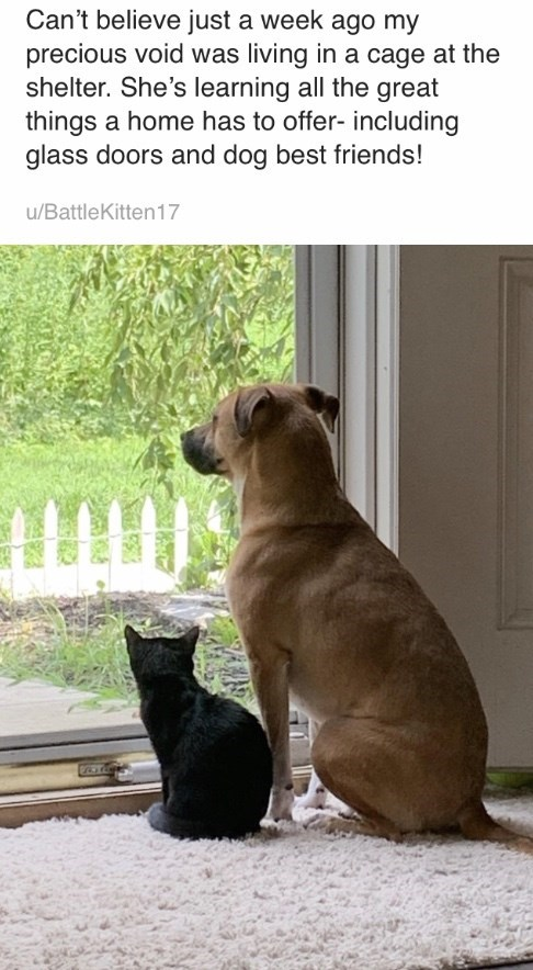 Mammal - Can't believe just a week ago my precious void was living in a cage at the shelter. She's learning all the great things a home has to offer- including glass doors and dog best friends! u/BattleKitten 17