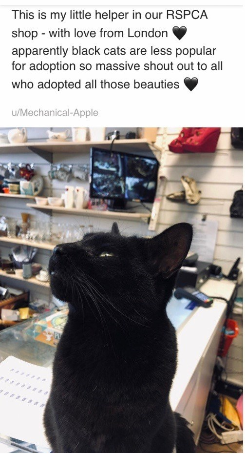 Cat - This is my little helper in our RSPCA shop - with love from London apparently black cats are less popular for adoption so massive shout out to all who adopted all those beauties u/Mechanical-Apple