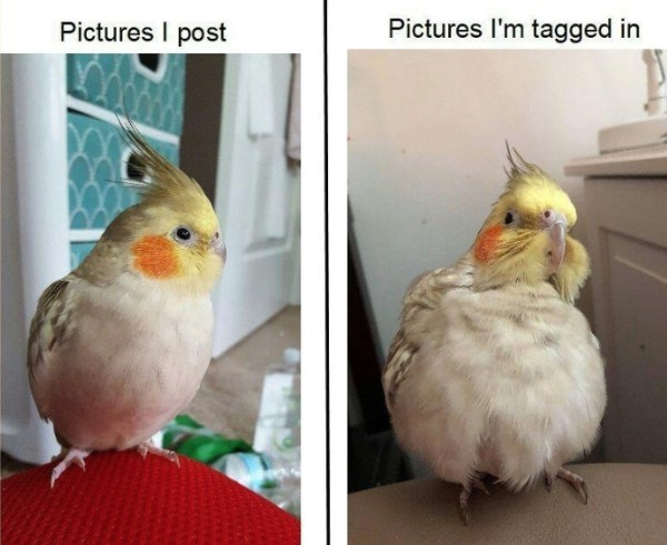 Bird - Pictures I post Pictures I'm tagged in
