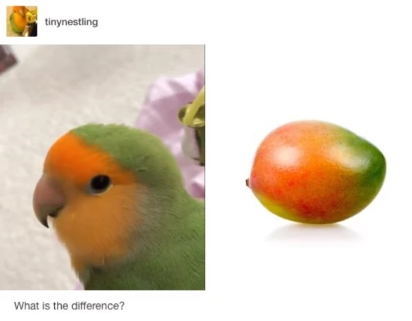 Lovebird - tinynestling What is the difference?