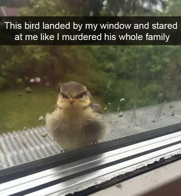 Bird - This bird landed by my window and stared at me like I murdered his whole family