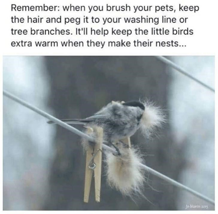 Organism - Remember: when you brush your pets, keep the hair and peg it to your washing line or tree branches. It'll help keep the little birds extra warm when they make their nests... Jo Morin 201