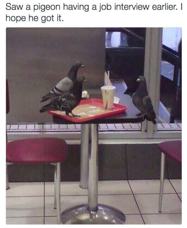 Table - pigeon having a job interview earlier. I hope he got it.