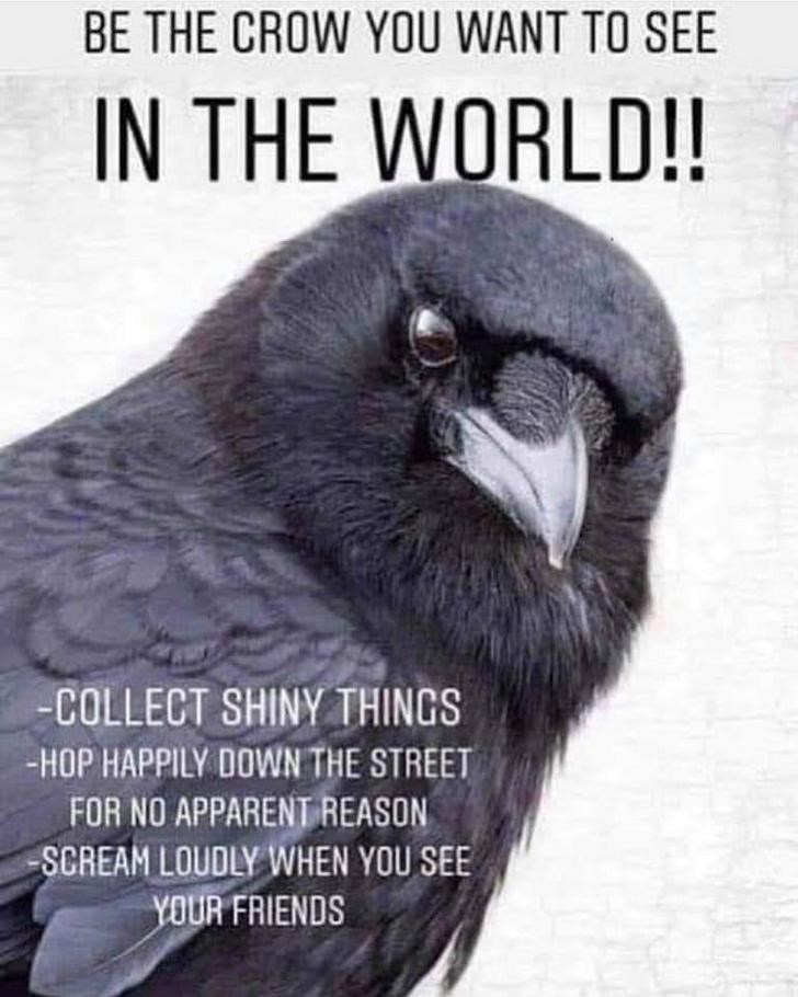 Bird - BE THE CROW YOU WANT TO SEE IN THE WORLD!! -COLLECT SHINY THINGS -HOP HAPPILY DOWN THE STREET FOR NO APPARENT REASON SCREAM LOUDLY WHEN YOU SEE YOUR FRIENDS