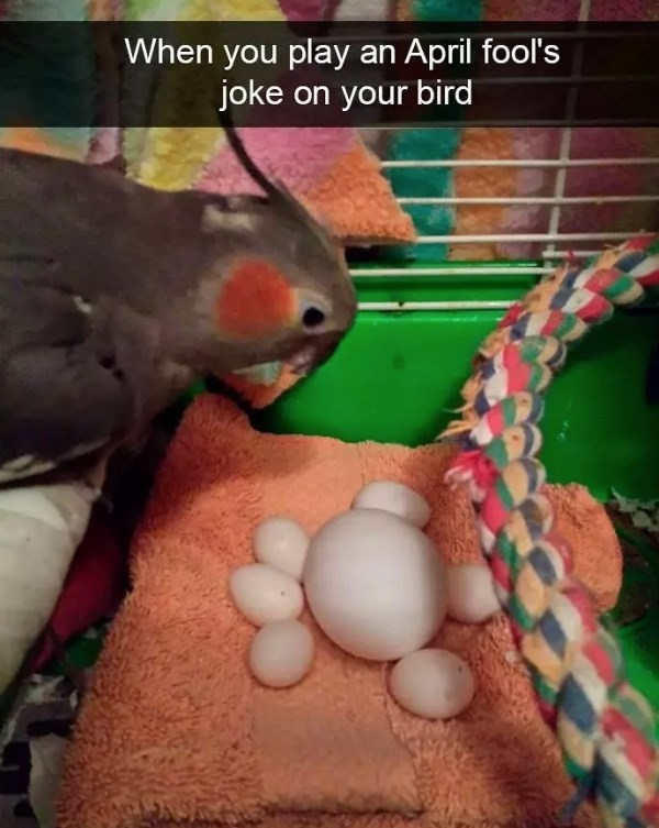 Parrot - When you play an April fool's joke on your bird