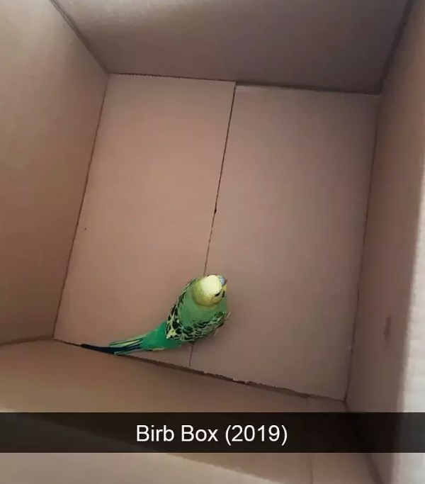 Budgie - Birb Box (2019)