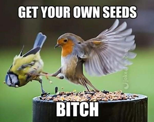 European robin - GET YOUR OWN SEEDS BITCH vjoke fun.com