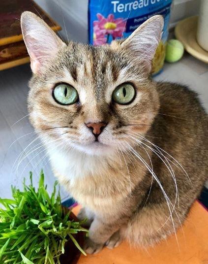Cat - Ter A
