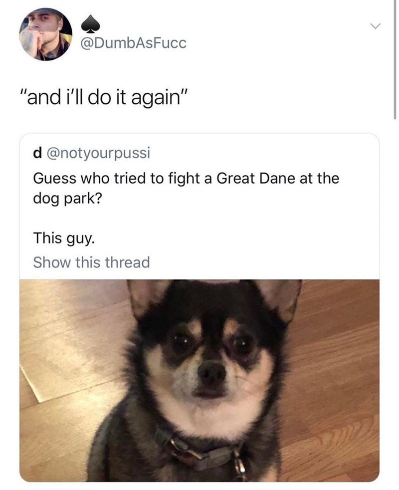 """Dog - @DumbAsFucc """"and i'll do it again"""" d @notyourpussi Guess who tried to fight a Great Dane at the dog park? This guy. Show this thread"""