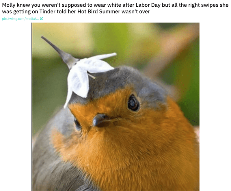 European robin - Molly knew you weren't supposed to wear white after Labor Day but all the right swipes she was getting on Tinder told her Hot Bird Summer wasn't over pbs.twimg.com/media/...
