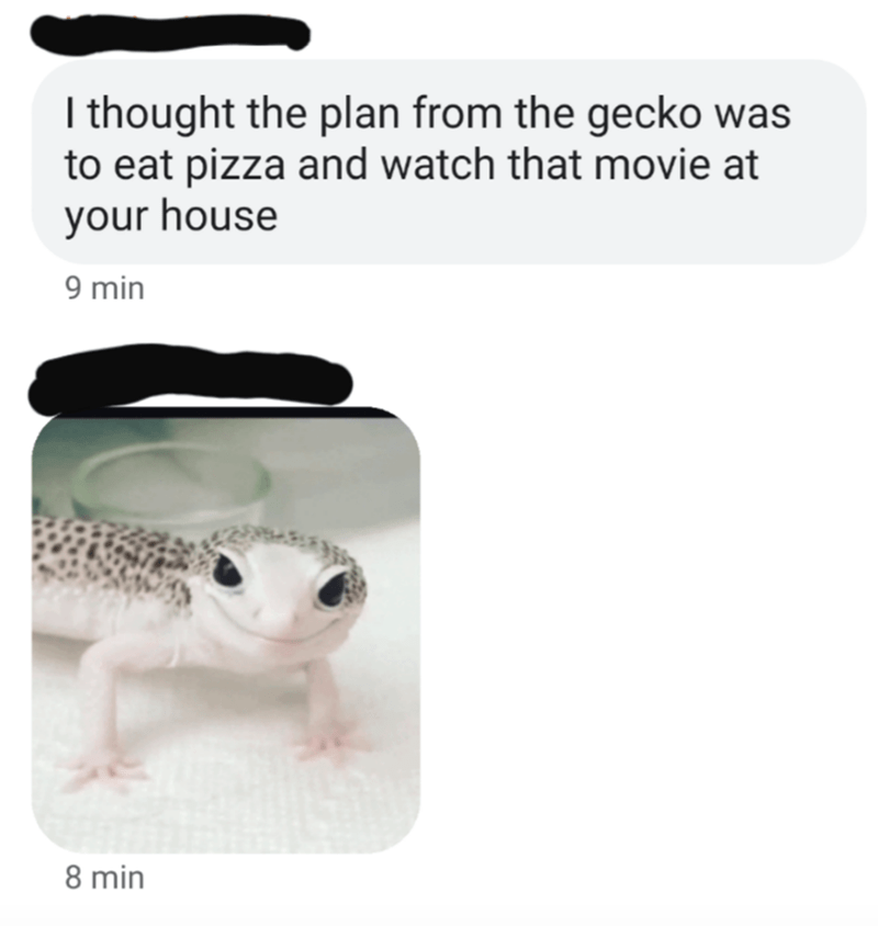 Amphibian - I thought the plan from the gecko was to eat pizza and watch that movie at your house 9 min 8 min