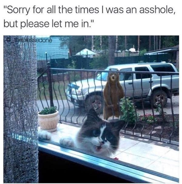 """Funny meme that reads, """"Sorry for all the times I was an asshole, but please let me in"""" above a photo of a cat meowing at the window while a bear stands outside the gate"""
