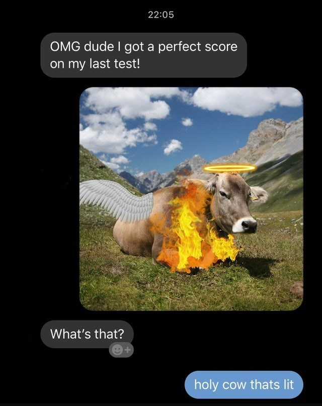 Bovine - 22:05 OMG dude I got a perfect score on my last test! What's that? + holy cow thats lit