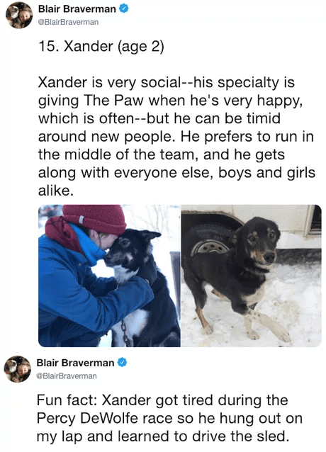 Canidae - Blair Braverman @BlairBraverman 15. Xander (age 2) Xander is very social--his specialty is giving The Paw when he's very happy, which is often--but he can be timid around new people. He prefers to run in the middle of the team, and he gets along with everyone else, boys and girls alike Blair Braverman @BlairBraverman Fun fact: Xander got tired during the Percy DeWolfe race so he hung out on my lap and learned to drive the sled.