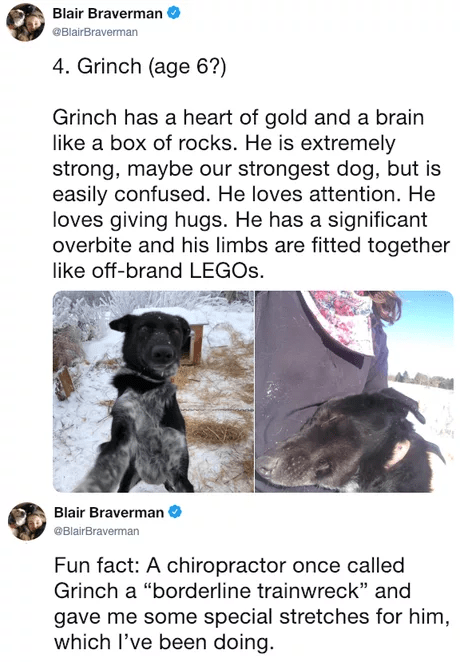 "Canidae - Blair Braverman @BlairBraverman 4. Grinch (age 6?) Grinch has a heart of gold and a brain like a box of rocks. He is extremely strong, maybe our strongest dog, but is easily confused. He loves attention. He loves giving hugs. He has a significant overbite and his limbs are fitted together like off-brand LEGOS. Blair Braverman BlairBraverman Fun fact: A chiropractor once called Grinch a ""borderline trainwreck"" and gave me some special stretches for him, which l've been doing."