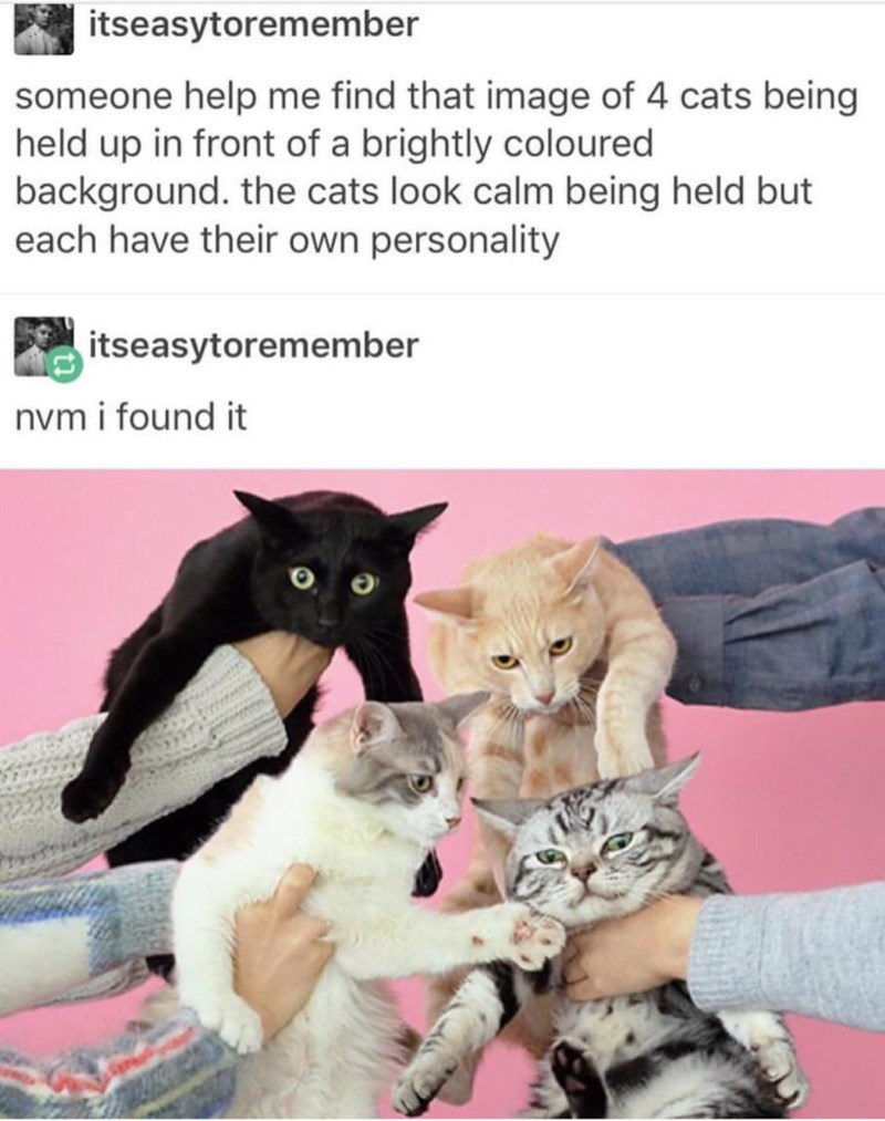 Cat - itseasytoremember someone help me find that image of 4 cats being held up in front of a brightly coloured background. the cats look calm being held but each have their own personality itseasytoremember nvm i found it