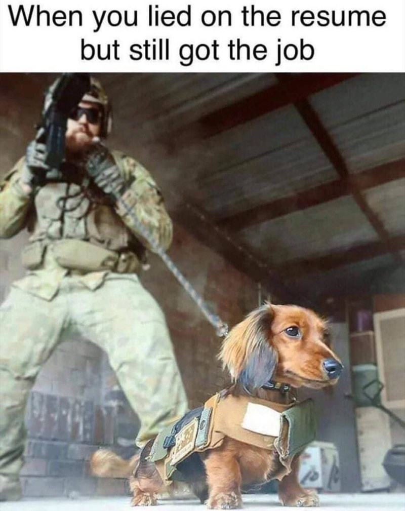 Text - Dog - When you lied on the resume but still got the job