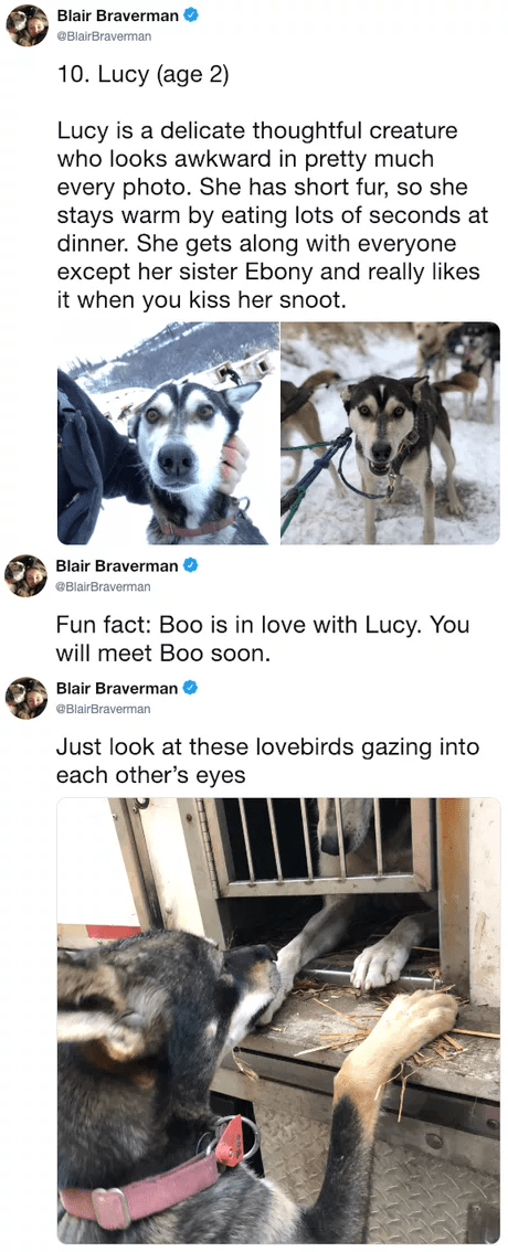 Siberian husky - Blair Braverman @BlairBraverman 10. Lucy (age 2) Lucy is a delicate thoughtful creature who looks awkward in pretty much every photo. She has short fur, so she stays warm by eating lots of seconds at dinner. She gets along with everyone except her sister Ebony and really likes it when you kiss her snoot. Blair Braverman BlairBraverman Fun fact: Boo is in love with Lucy. You will meet Boo soon. Blair Braverman @BlairBraverman Just look at these lovebirds gazing into each other's