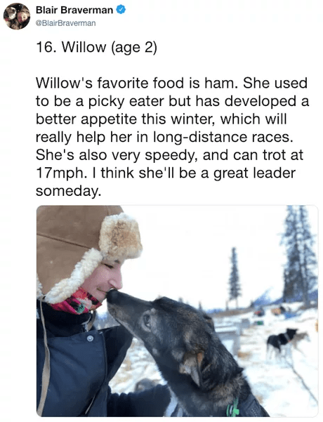 Canidae - Blair Braverman @BlairBraverman 16. Willow (age 2) Willow's favorite food is ham. She used to be a picky eater but has developed a better appetite this winter, which will really help her in long-distance races. She's also very speedy, and can trot at 17mph. I think she'll be a great leader someday.