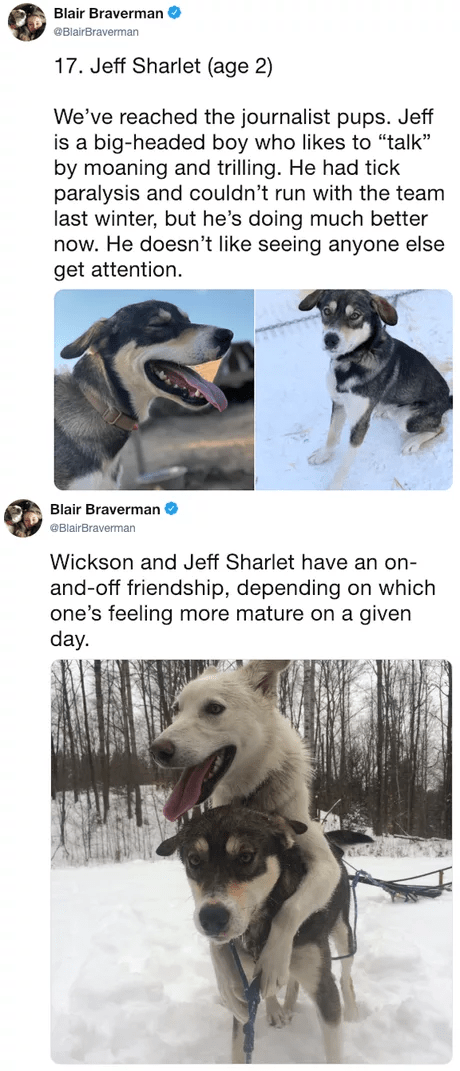 """Dog - Blair Braverman BlairBraverman 17. Jeff Sharlet (age 2) We've reached the journalist pups. Jeff is a big-headed boy who likes to """"talk"""" by moaning and trilling. He had tick paralysis and couldn't run with the team last winter, but he's doing much better now. He doesn't like seeing anyone else get attention. Blair Braverman @BlairBraverman Wickson and Jeff Sharlet have an on- and-off friendship, depending on which one's feeling more mature on a given day."""