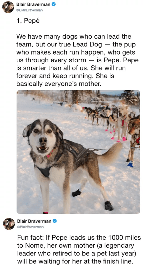 Dog - Blair Braverman @BlairBraverman 1. Рере We have many dogs who can lead the team, but our true Lead Dog the pup who makes each run happen, who gets us through every storm is smarter than all of us. She will run is Pepe. Pepe forever and keep running. She is basically everyone's mother. Blair Braverman BlairBraverman Fun fact: If Pepe leads us the 1000 miles to Nome, her own mother (a legendary leader who retired to be a pet last year) will be waiting for her at the finish line.