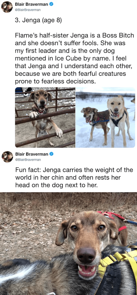 Dog - Blair Braverman BlairBraverman 3. Jenga (age 8) Flame's half-sister Jenga is a Boss Bitch and she doesn't suffer fools. She was my first leader and is the only dog mentioned in Ice Cube by name. I feel that Jenga and I understand each other, because we are both fearful creatures prone to fearless decisions. Blair Braverman BlairBraverman Fun fact: Jenga carries the weight of the world in her chin and often rests her head on the dog next to her.