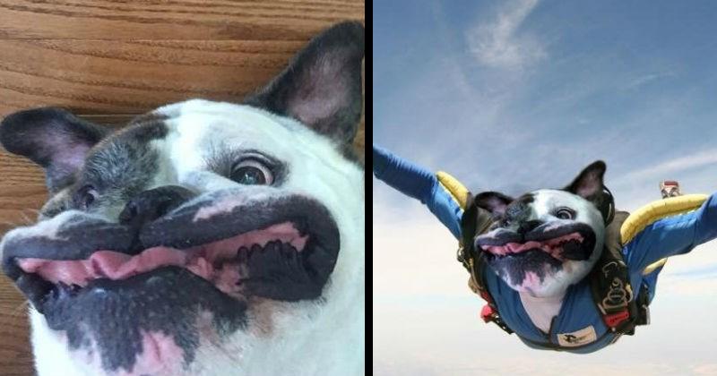 funny photoshops