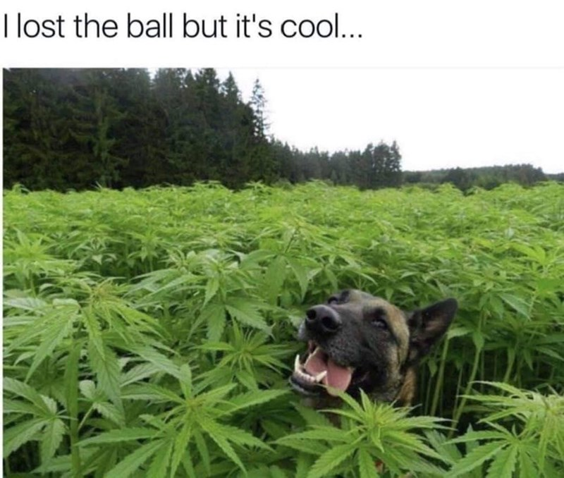 Canidae - I lost the ball but it's coo...