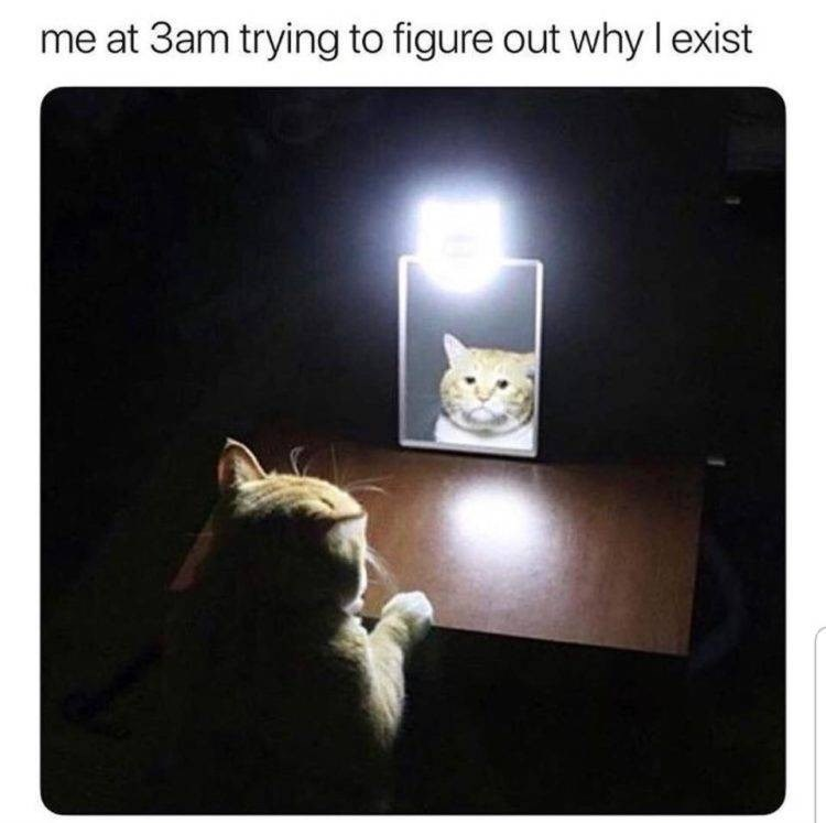 Cat - me at 3am trying to figure out why l exist