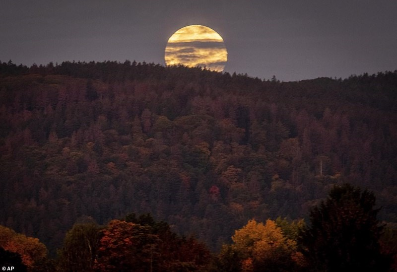 hunter's moon rising behind mountain full with trees
