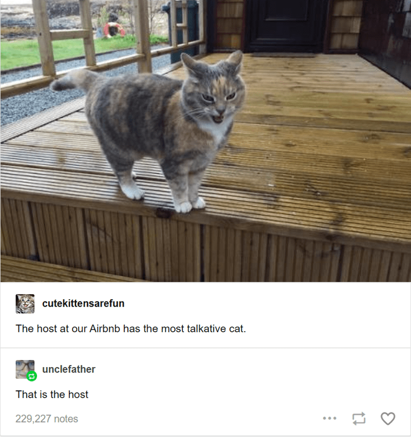 Cat - cutekittensarefun The host at our Airbnb has the most talkative cat unclefather That is the host 229,227 notes