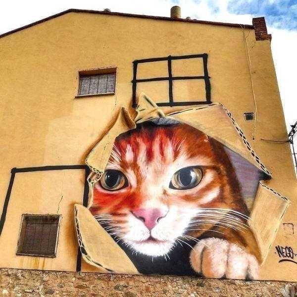Cat - NEO