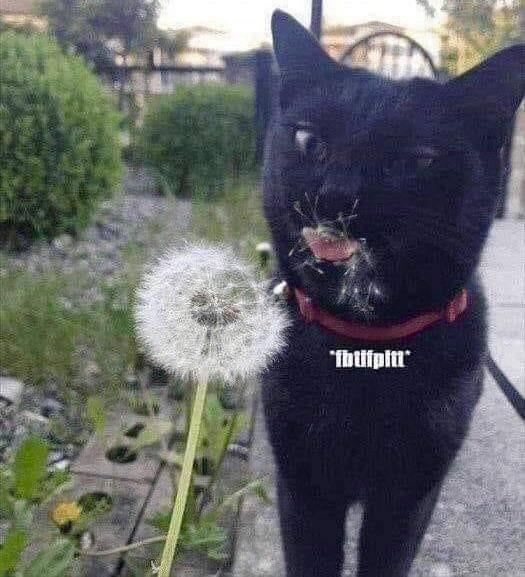 cat memes - 9374329344