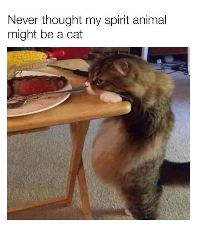 cat memes - 9374330624