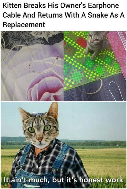 cat memes - 9374330880